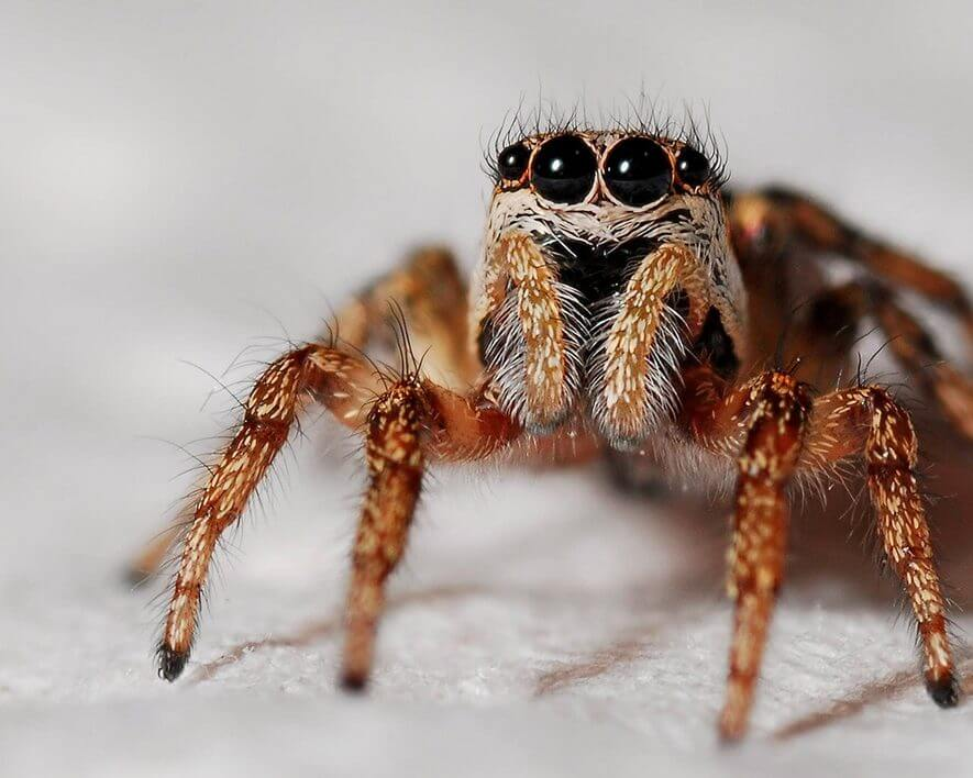 accounting-news-leases-clients-spiders