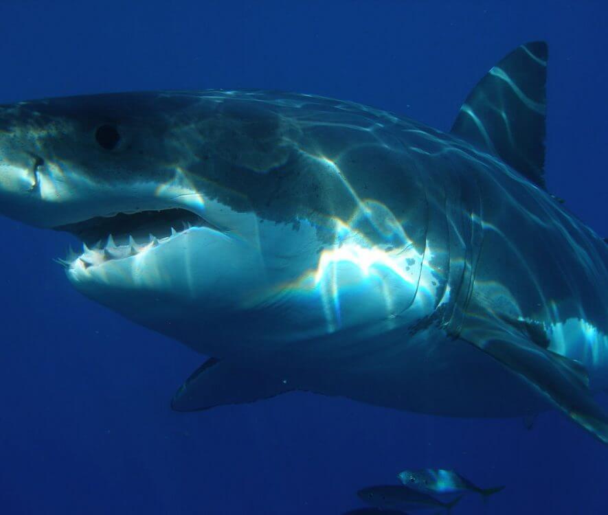 accounting news shark phelps