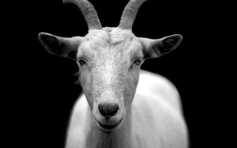 accounting news trump ceos goat yoga calibri font printing