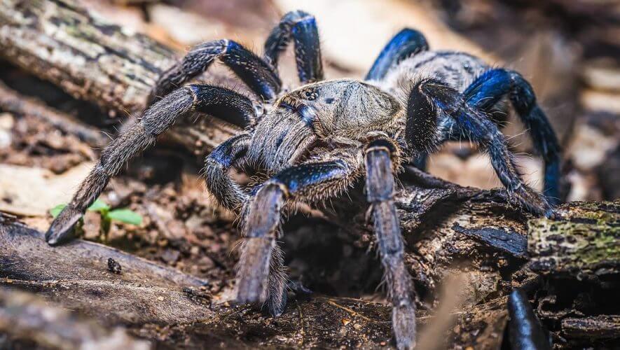 accounting news blue tarantula rsm canada