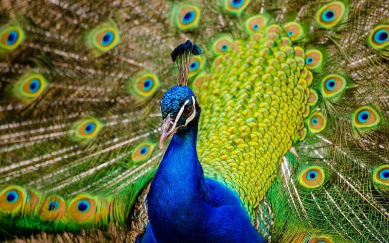 accounting news peacock big 4 frc